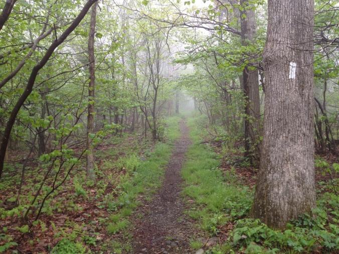 Hiker Superhighway
