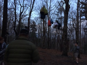 Bears must think of this as a food bag tree.