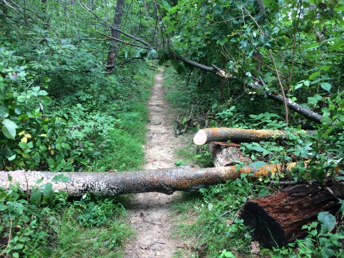 Just after cutting the first branch, another small tree came crashing down.  It scared the scat out of me!