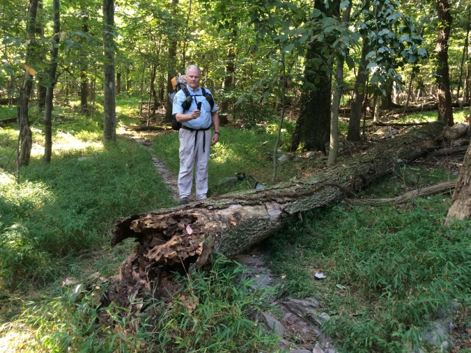 Hal measures and notes a blowdown he will include in his weekly report.  This one will require a chain or crosscut saw for removal.