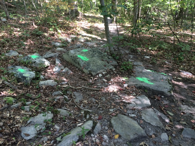 We found some strange markings that extended from this spot along the trail far into the woods beyond the trail corridor is the type of anomaly ridgerunners find and report.